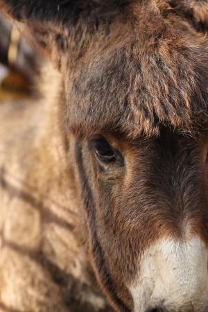 baby ass: little donkey