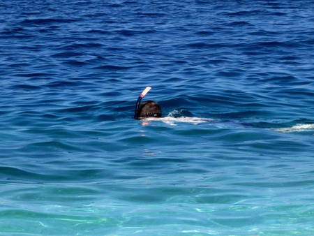 snorkling in the water photo