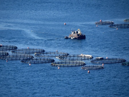 a view of farmed marine fish photo