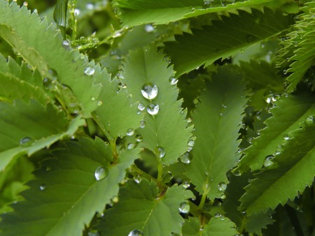 a detail of some drop on a green leaf photo