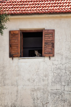 snoozing: a cat at the window