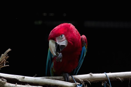 a view of a colored parrot photo