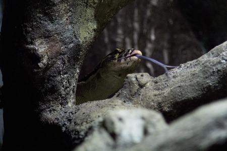 a view of an iguana