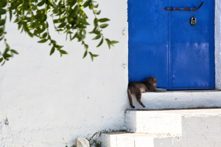a view of a cat and a blue door photo