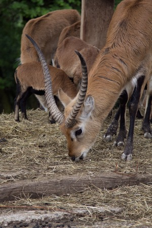 bounding: a view of some antelope