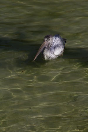 a view of a pelican photo