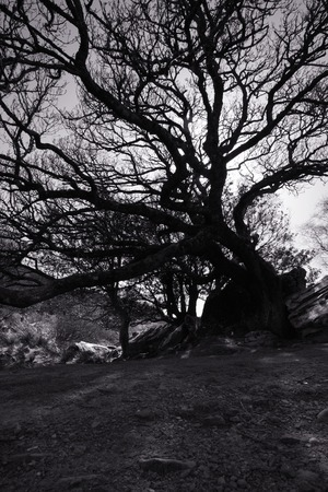 a view of an old tree photo