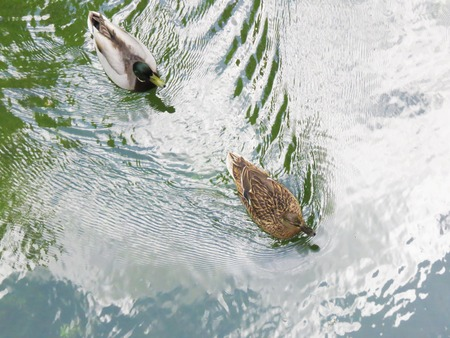a view of a wild duck