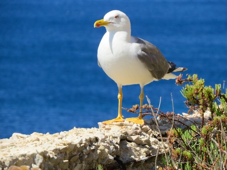 wing span: a view of a seagull on the water Stock Photo