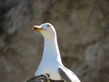 wingspread: a view of a seagull on the water Stock Photo
