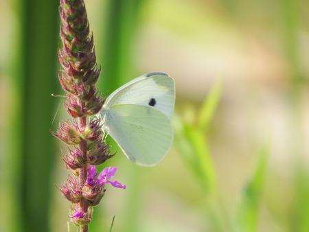 underbrush: a view of a white butterfly