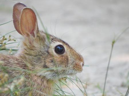 munch: a view of a rabbit