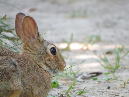 animal vein: a view of a rabbit