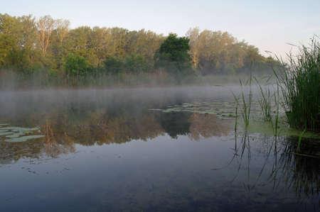 River och våren skog. Natur komposition.