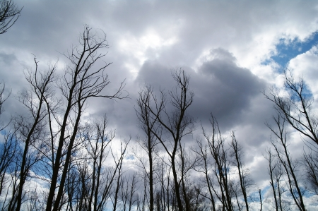 forest under cloudy blue sky photo