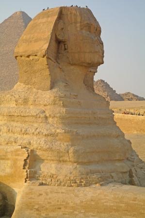Majestic Sphinx in Cairo Egypt   photo