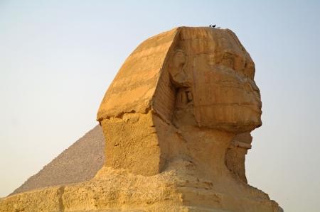 Majestic Sphinx in Cairo Egypt