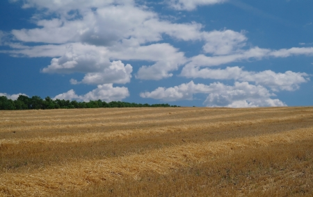 Stubble field and stormy clouds background  photo