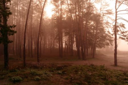 misty forest at dusk  photo