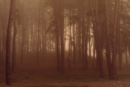 misty forest at dusk  Stock Photo