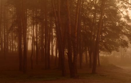 misty forest at dusk  Stock Photo - 16404219
