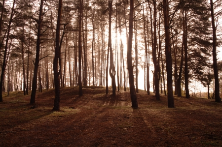 Coniferous forest illuminated by the morning sun on a foggy autumn day Stock Photo - 16404285