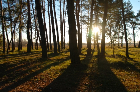 Coniferous forest illuminated by the morning sun on a foggy autumn day Stock Photo - 16883067
