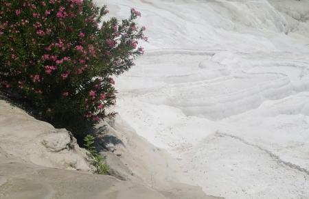 pamuk: Carbonato terrazzi travertini a Pamukkale, Turchia