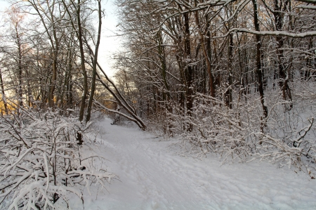 winter wood  photo