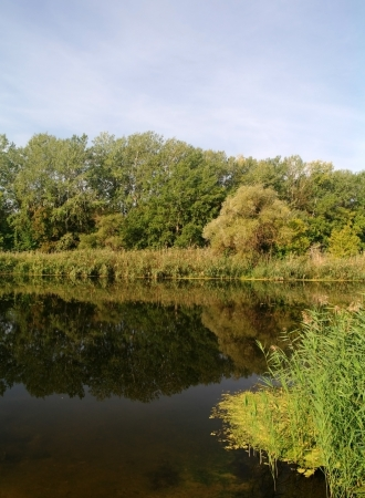 River landscape and an autumn wood Stock Photo - 17597782
