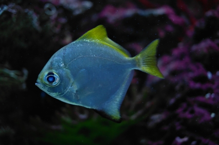 colorful fish under water Stock Photo - 23381751