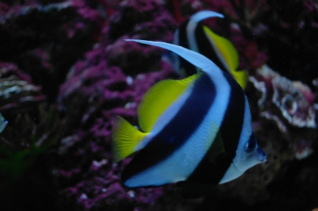 colorful fish under water photo