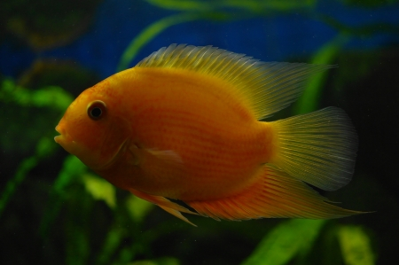 colorful fish under water Stock Photo - 23381753