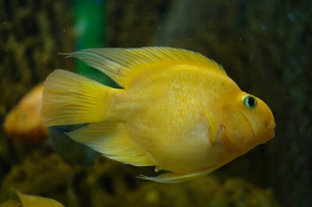 colorful fish under water Stock Photo - 23381754