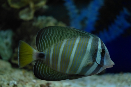 colorful fish under water Stock Photo - 23381787