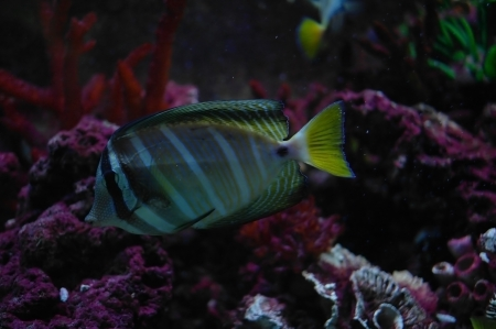 colorful fish under water Stock Photo - 23381789