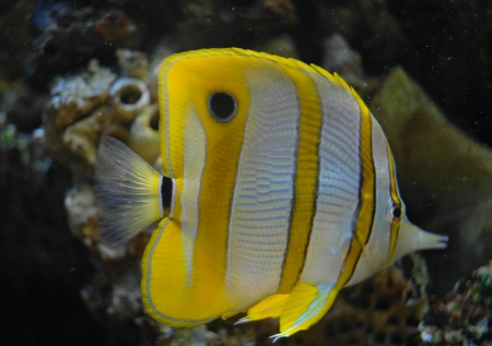 colorful fish under water Stock Photo - 23381790