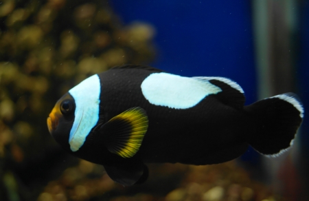 colorful fish under water Stock Photo - 23381791