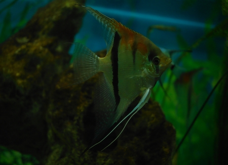 colorful fish under water Stock Photo - 23381792
