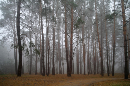 nus: Autumn forest in the morning mist