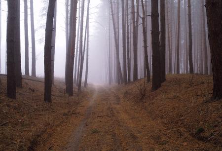 Höstskog i morgondimman