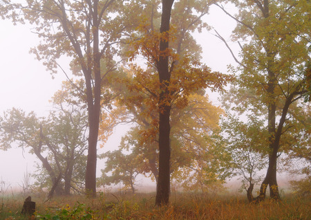 autumn forest with misty morning . Stock Photo