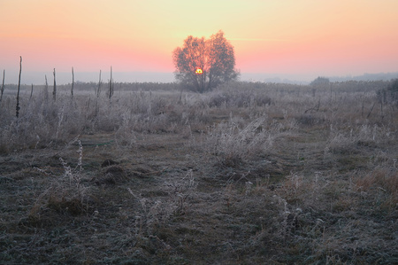 dry grass in the meadow near the woods covered with frost cold foggy morning.