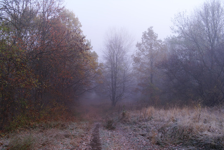 nus: autumn forest with misty morning . Stock Photo