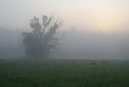 Misty meadow spring at sunrise.
