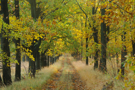 Road under the trees in autumn. Stock Photo