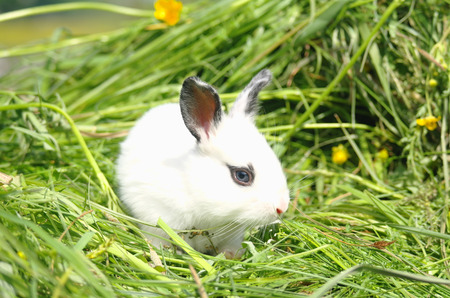baby rabbit on green grass.