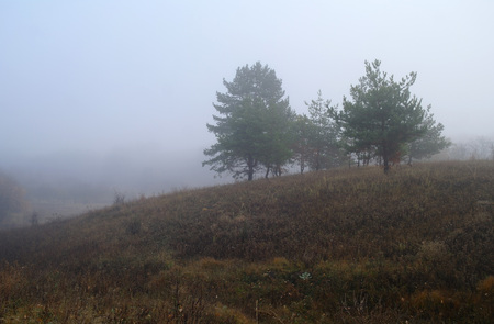 autumn forest with misty morning . 免版税图像