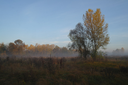 autumn forest with misty morning Фото со стока