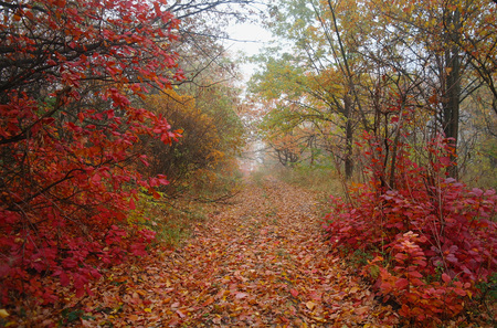 country road in autumn in the mist